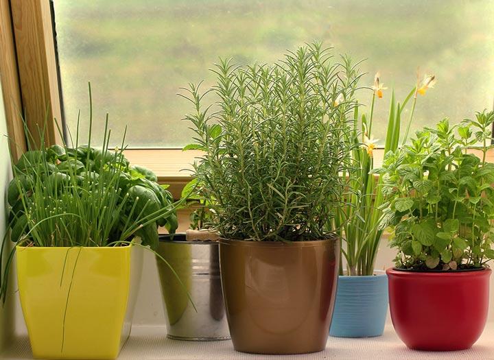 Quiet Corner Indoor Winter Gardening Tips Quiet Corner