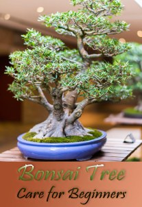 What To Do With Your First Bonsai