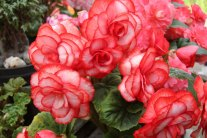 Easy Annual Plants That Bloom All Summer Long