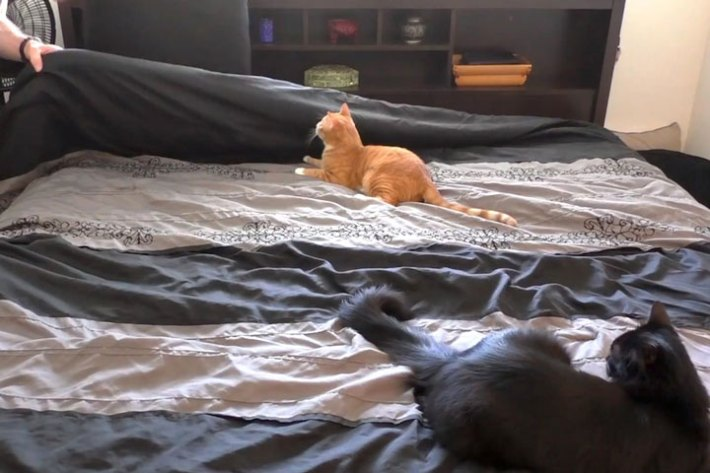 Making a Bed With Cats Around