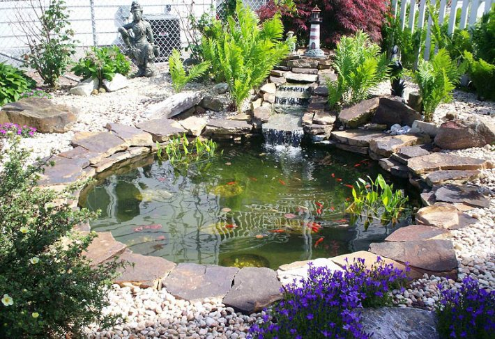 The Water Garden - Care & Feeding of Pond Fish