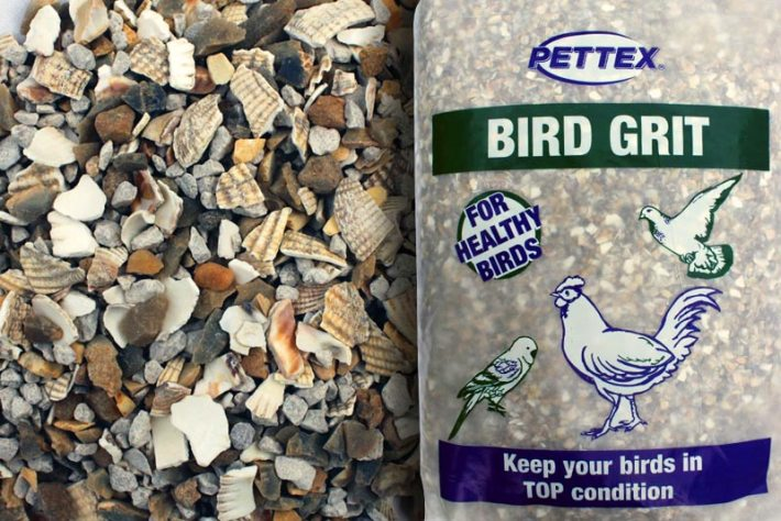 Do birds need grit?