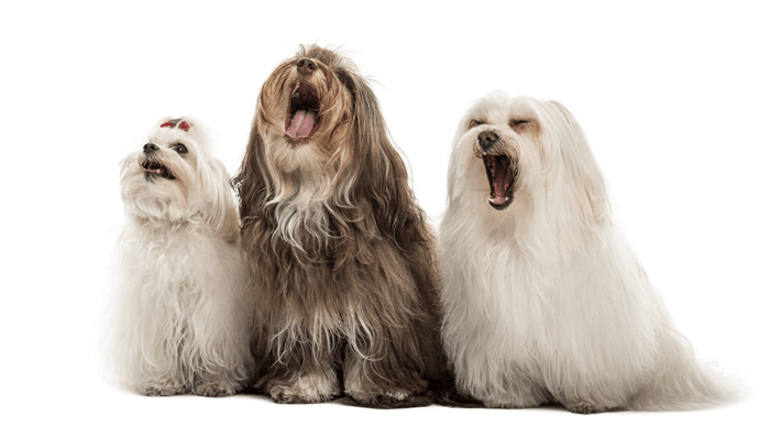 Dogs - How to Stop Excessive Barking