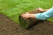 Replacing Grass with Sod