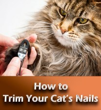 How to Trim Your Cat's Nails