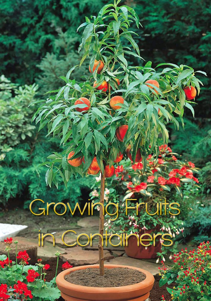 Growing Fruits in Containers
