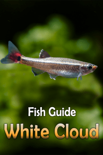 White Cloud – Fish Guide