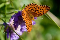 All About Butterfly Garden