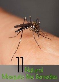 11 Natural Mosquito Bite Remedies