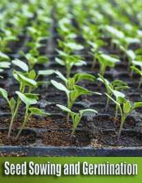 Seed Sowing and Germination - Common Mistakes