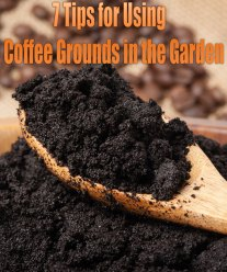 7 Tips for Using Coffee Grounds in the Garden