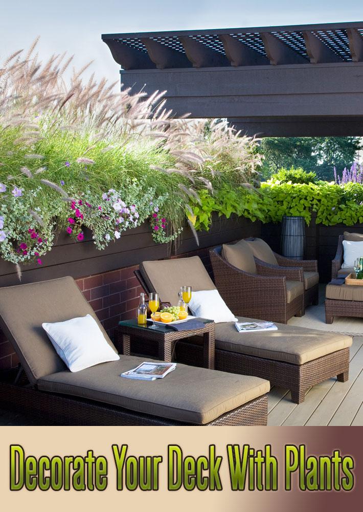 Decorate Your Deck With Plants - Quiet Corner