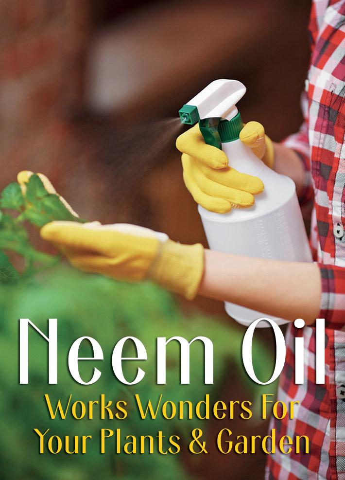 Neem Oil Works Wonders For Your Plants & Garden - Quiet Corner