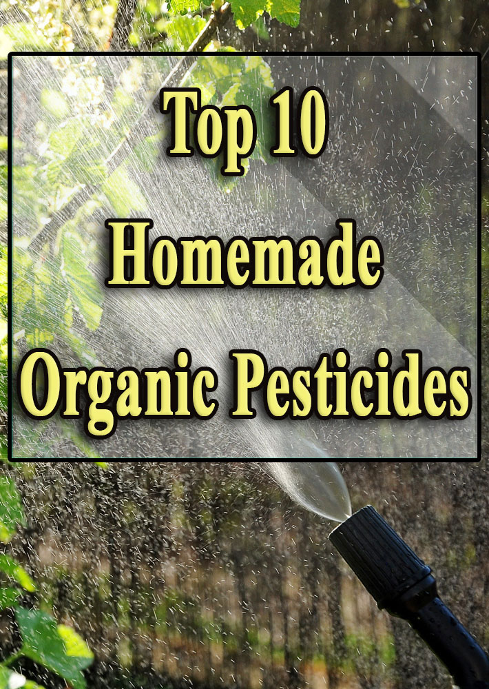 Top 10 Homemade Organic Pesticides - Quiet Corner