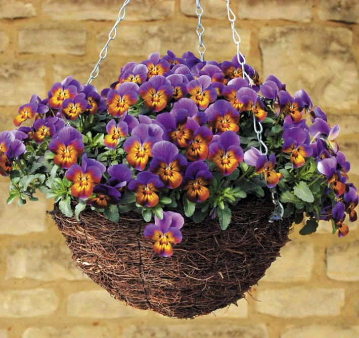 Quiet Corner Container Gardening Ideas: Quiet Corner:How To Plant Hanging Baskets And Containers