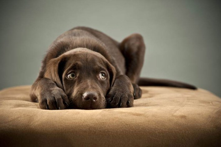 10 Ways to Stress out Your Dog Without Knowing It