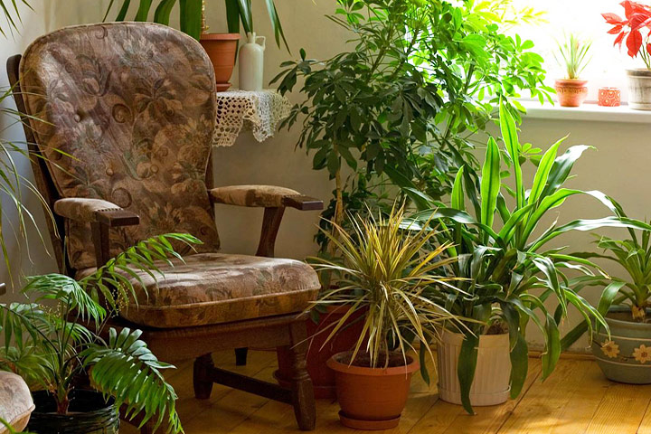 House Plants - Magazine cover