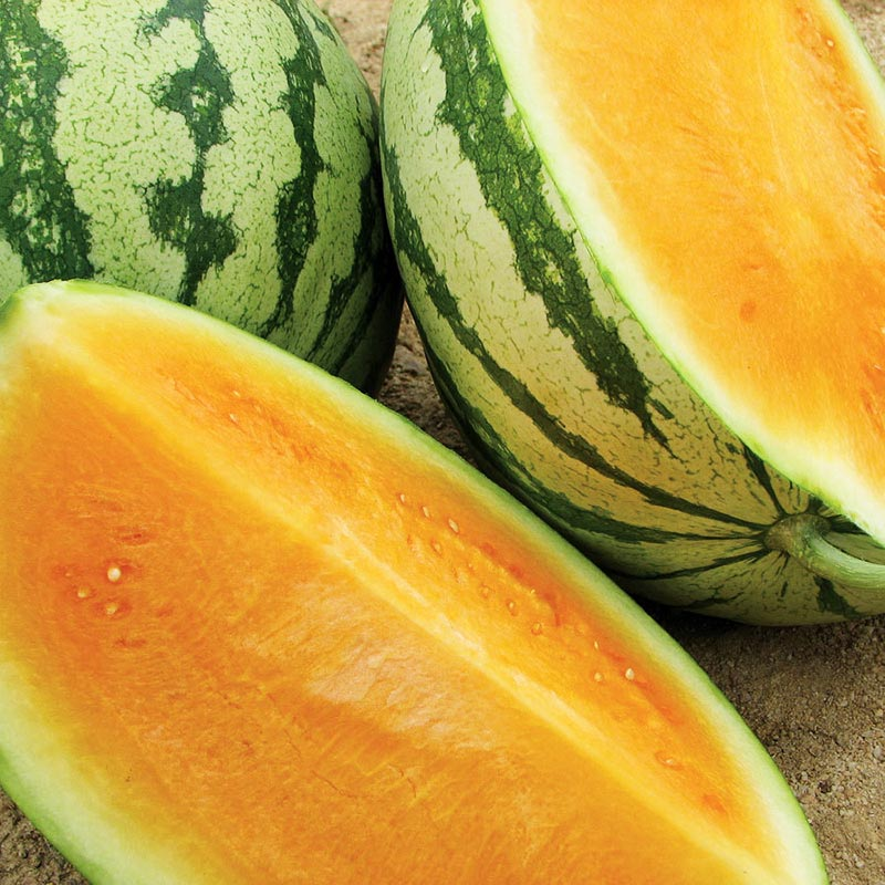 how to grow watermelon at home