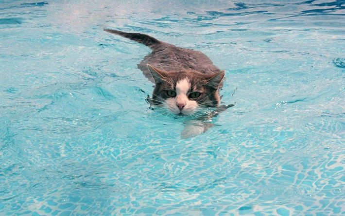 Is it Chlorine in Pools Safe for Pets
