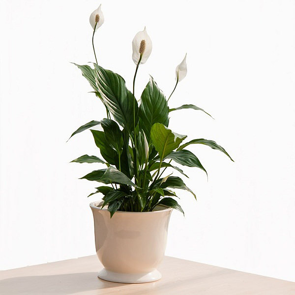 how to grow houseplants in water