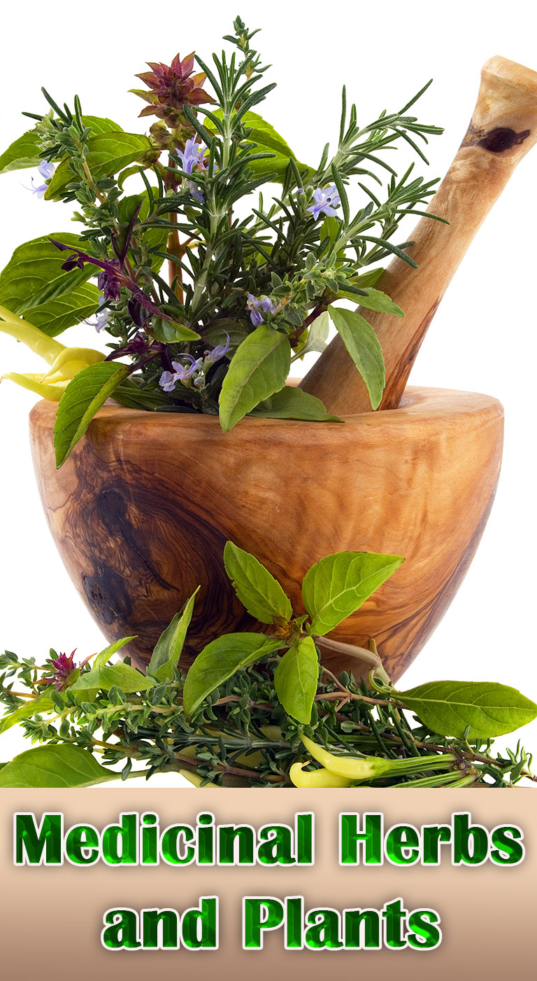 Growing Medicinal Herbs and Plants at Home - Quiet Corner