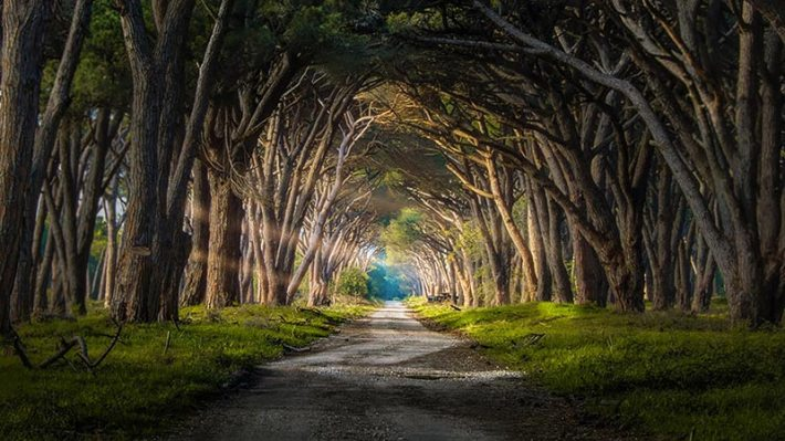 Magical Paths Begging To Be Walked