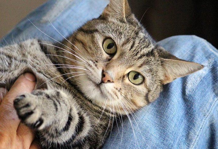 Where Your Cat Wants to Be Petted, According to Science