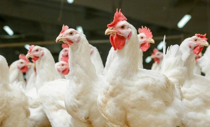 Animal Free SuperMeat: Lab-Cultured Meat