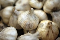 Garlic Varieties - What Type to Plant and How