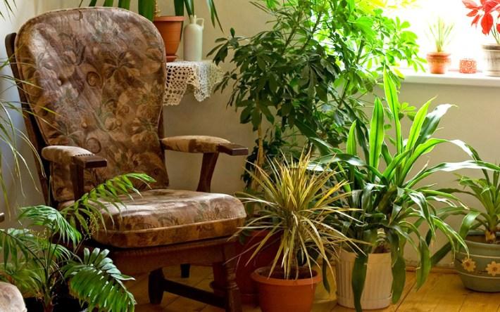 Steps for Bringing Plants Indoors for Winter