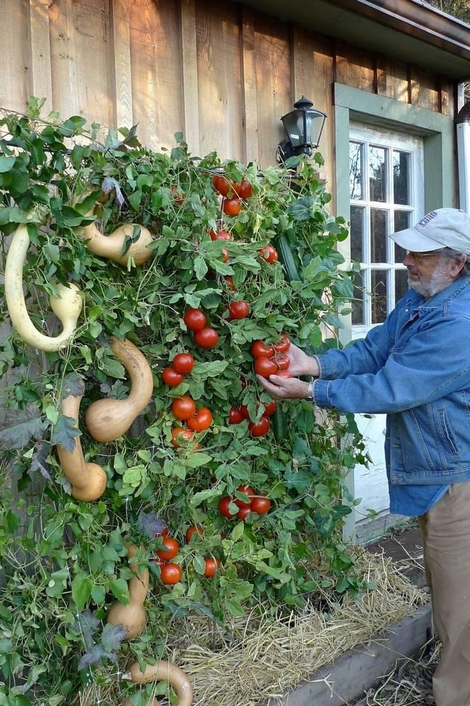 Gardening Tips - 7 Habits of Highly Productive Gardeners