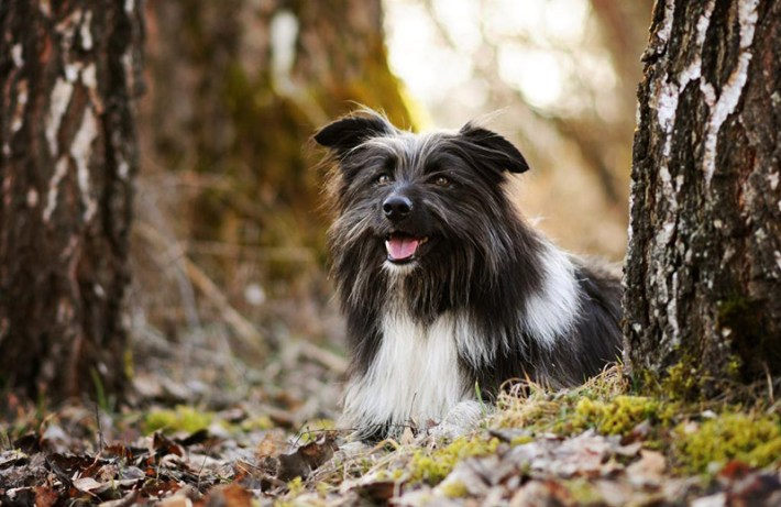 Soulful Portraits Of Dogs In Austrian Wilderness