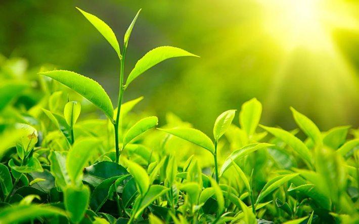 Wonderful Detox Herbs
