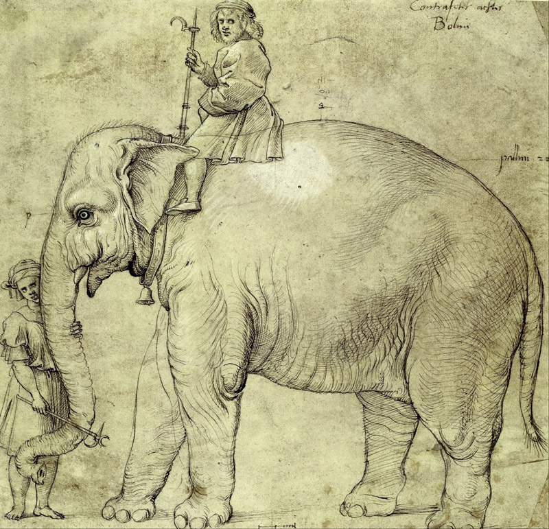 Why is an Elephant Buried Under the Vatican? - Quiet Corner
