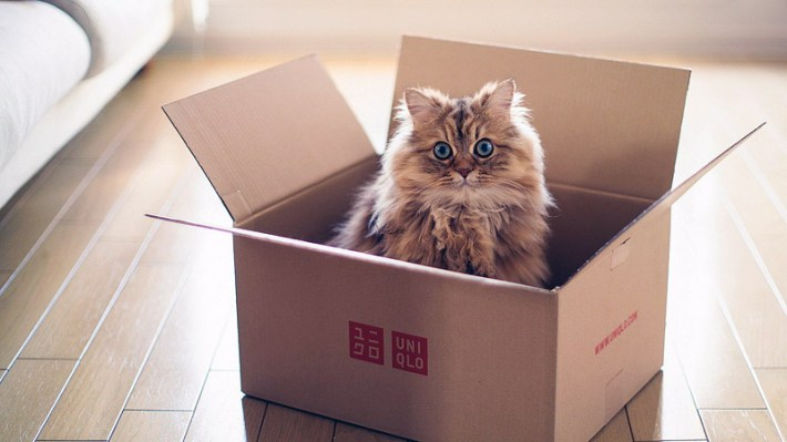 What's Up With That: Why do Cats Love Boxes so Much?