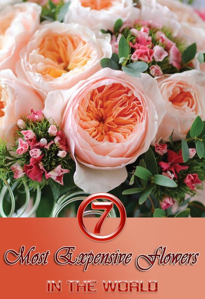 Quiet Corner:7 Most Expensive Flowers in the World - Quiet Corner