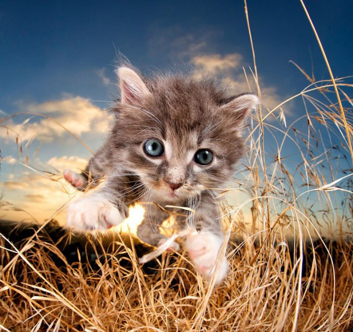 POUNCE - Photo Book of Jumping Kittens