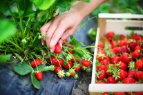 """""""Organic"""" Food From China Found To Be Highly Contaminated"""