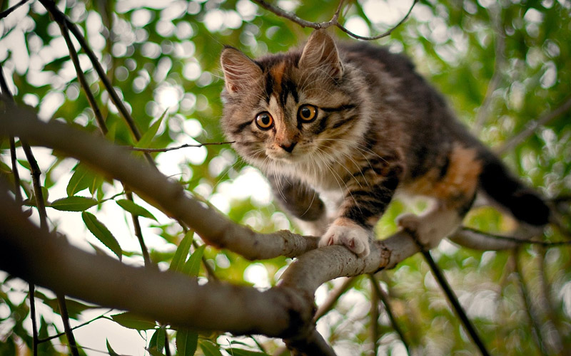 How to Get a Cat Down From a Tree - Quiet Corner
