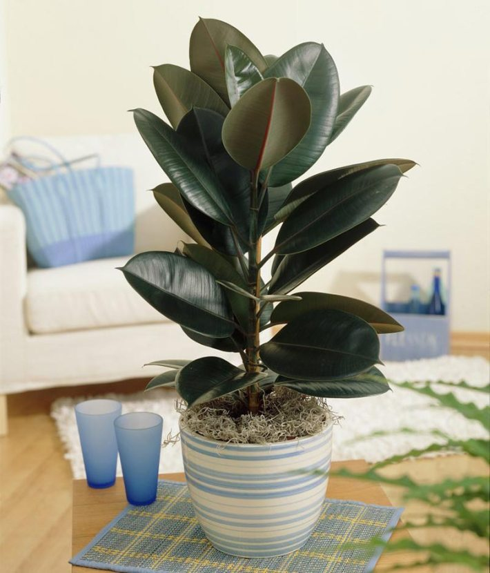 Easiest Houseplants You Can Grow