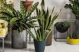 Six Cold Resistant Houseplants
