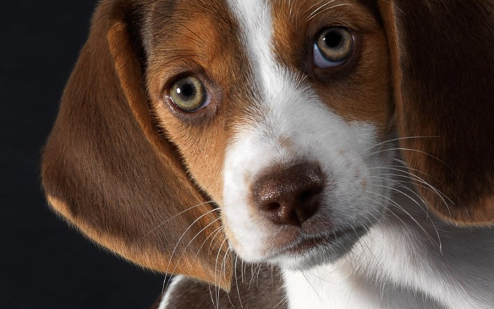 World's Most Gentle Dog Breeds