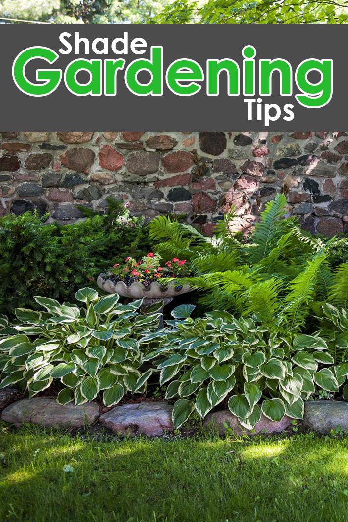 Quiet Corner Shade Gardening Tips Quiet Corner