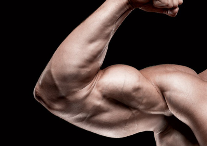 Strength Training: Building Arm Muscles