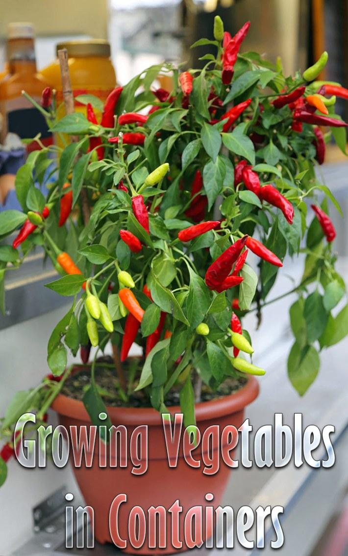 Container Gardening – 8 Easy to Grow Veggies