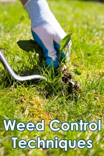 Weed Control Techniques