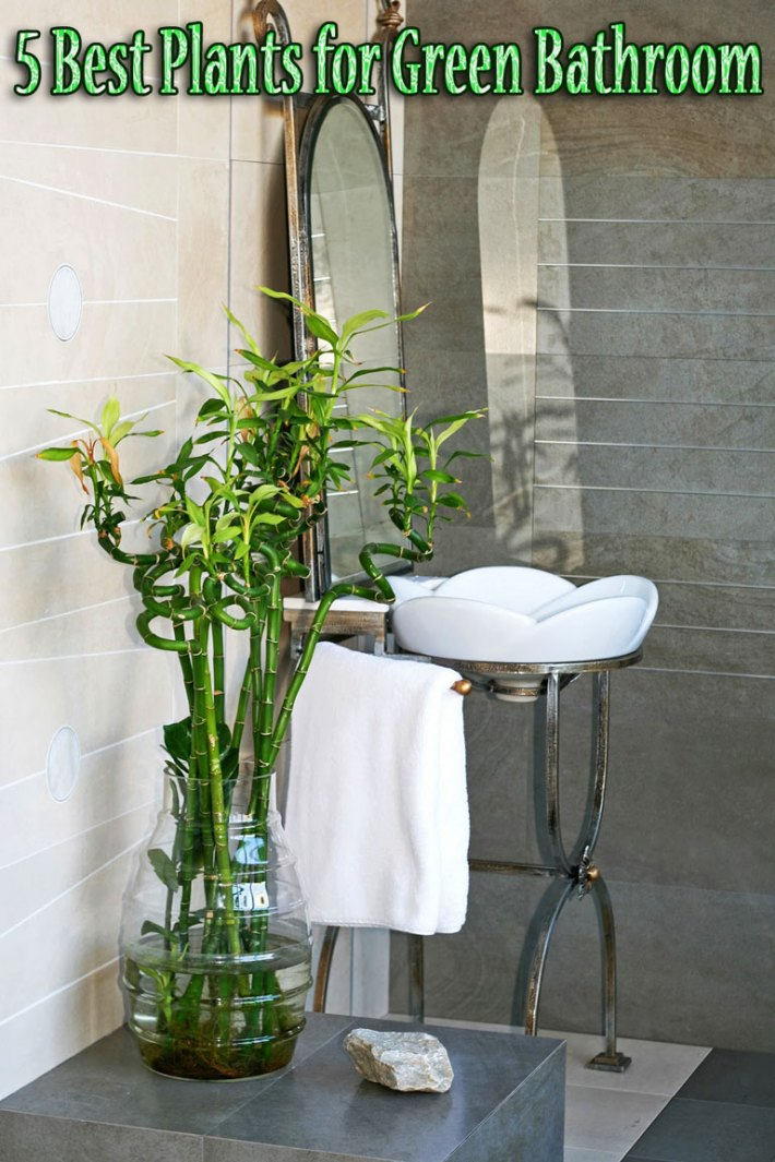 Quiet Corner5 Best Plants For Green Bathroom