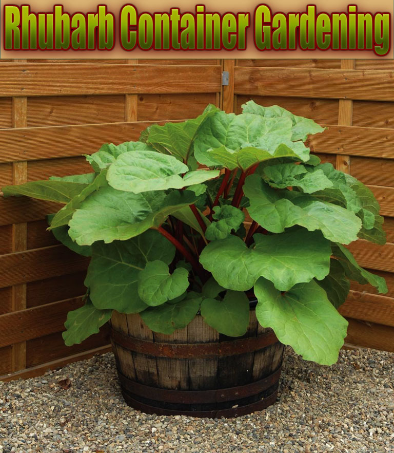 Quiet Corner Container Gardening Ideas