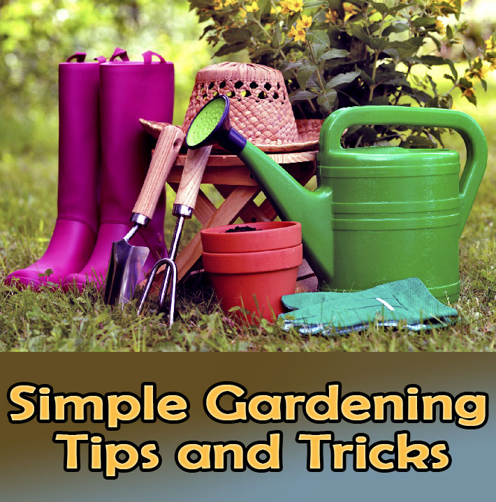 Simple Gardening Tips and Tricks - Quiet Corner