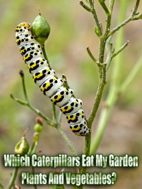 Which Caterpillars Eat My Garden Plants And Vegetables